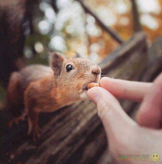Удивительные снимки о дружбе фотографа с животными