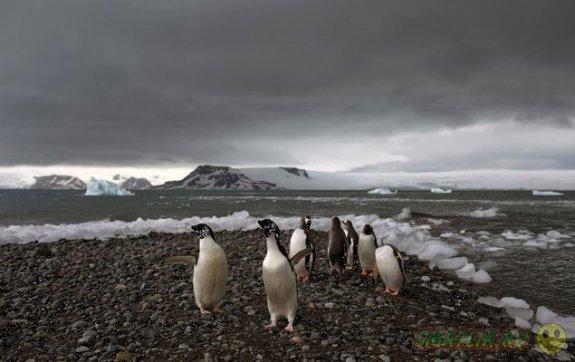Прогулка по таинственной Антарктиде