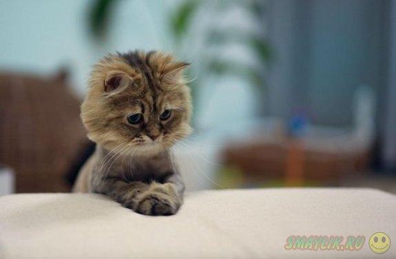 Коты всегда уверенны в себе