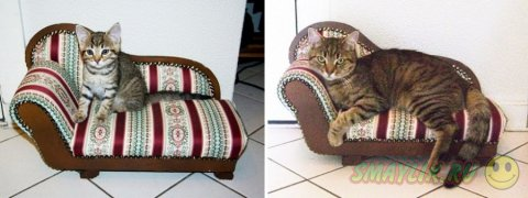 Котята, которые так быстро стали взрослыми