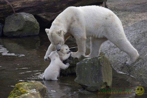 Лучшие фотографии животных со всего мира за прошедшие недели