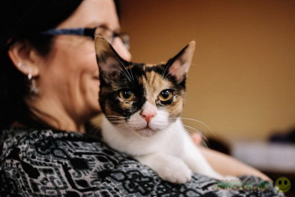 Очаровательные конкурсанты с выставки кошек