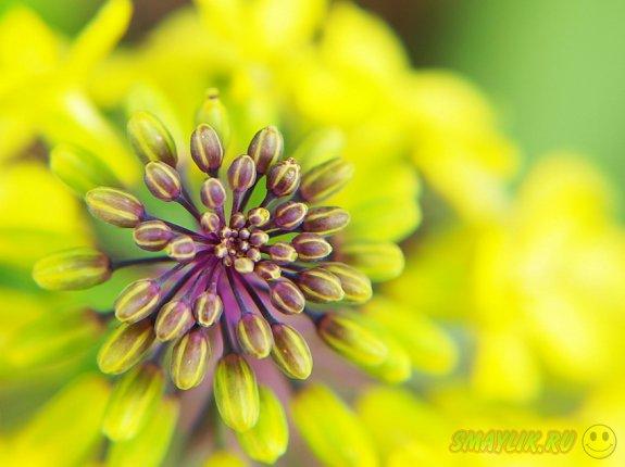 Пробуждение природы с приходом весны