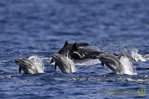 Снимки диких животных со всего мира