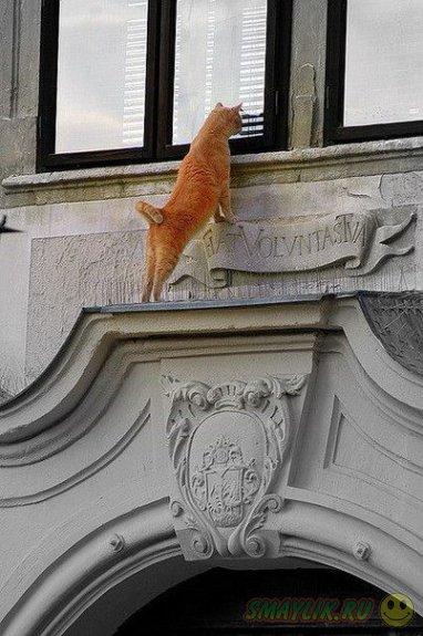 Смешные мартовские коты