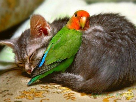 Умилительные спящие животные