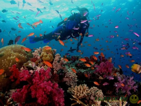 Подводная красота морей и океанов
