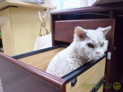 Грозный кот по имени Альберт