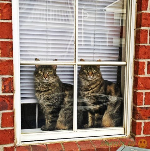 Забавные синхронные кошки
