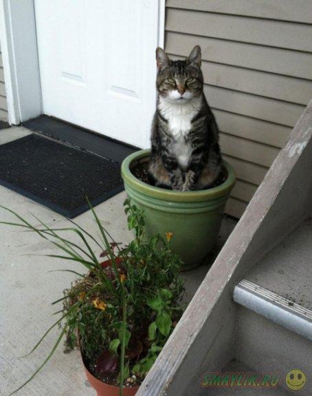 Коты, решившие  заняться цветоводством