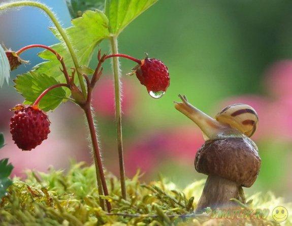 Уютный мир маленьких улиток