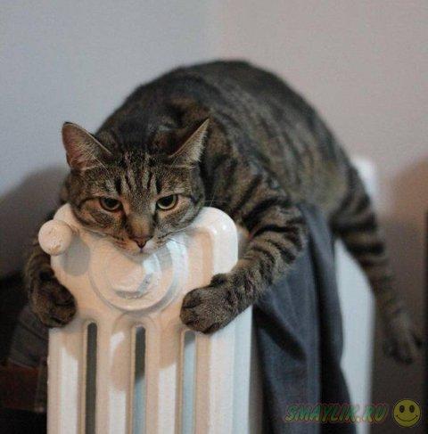 Мы все нуждаемся в тепле и заботе!