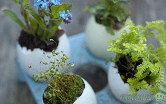 Прекрасный сад на ладошке