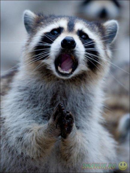 Забавные удивления у животных