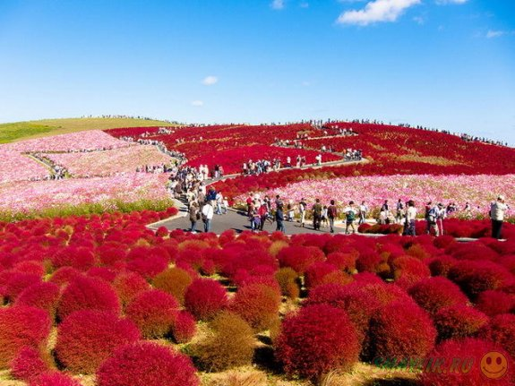 Красивый парк цветов в Японии
