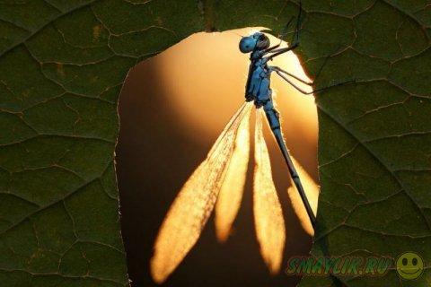 Волшебный мир улиток и насекомых вокруг нас