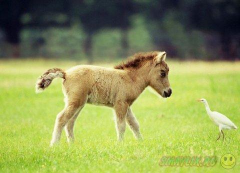 Очаровательные мини-лошадки