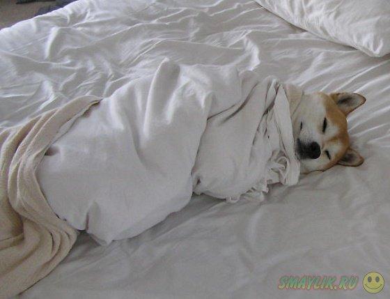 Собаки, решившие вздремнуть на мягких белоснежных кроватях