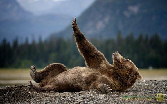 Милые косолапые медведи