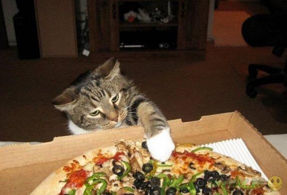 Фотографии по-настоящему голодных животных