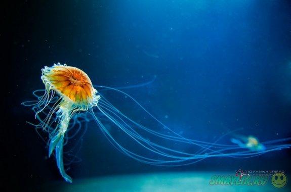 Красивые фотографии медуз