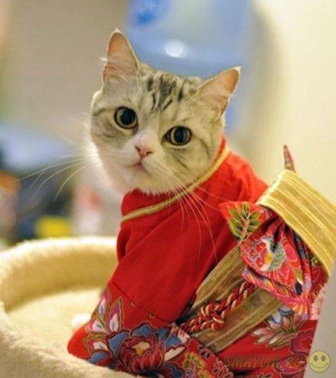 Кошки и кимоно — новое увлечение в Японии