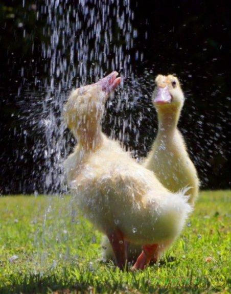 Животные под душем в летнюю жару