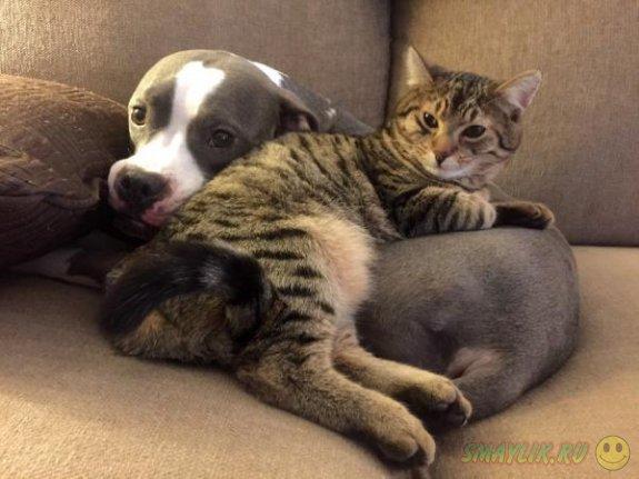 Коты и собаки - лучшие друзья
