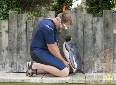 Как проходят уроки плаванья для пингвинов