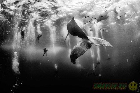 Лучшие фотографии National Geographic 2015