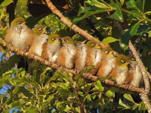 Подборка фотографий с милыми обнимающимися птицами