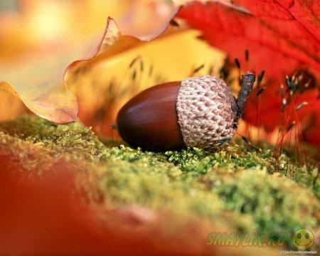 Осенние мотивы