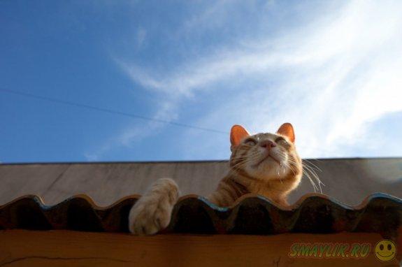 Улицы японского города глазами кошки